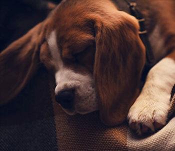 Trampoline Dog Beds